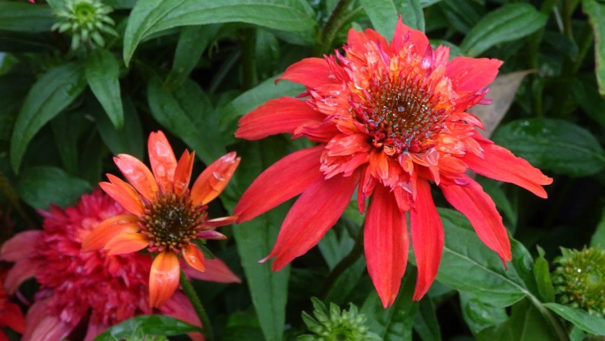 花卉日记-107_图1-11