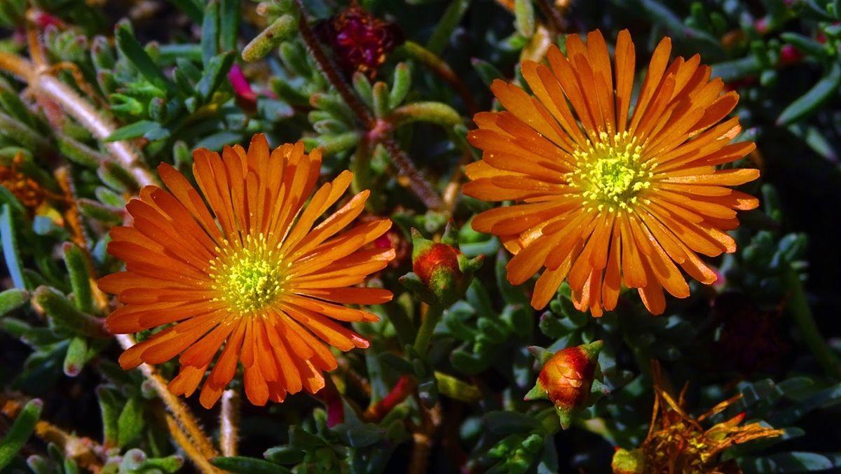 花卉日记-107_图1-12