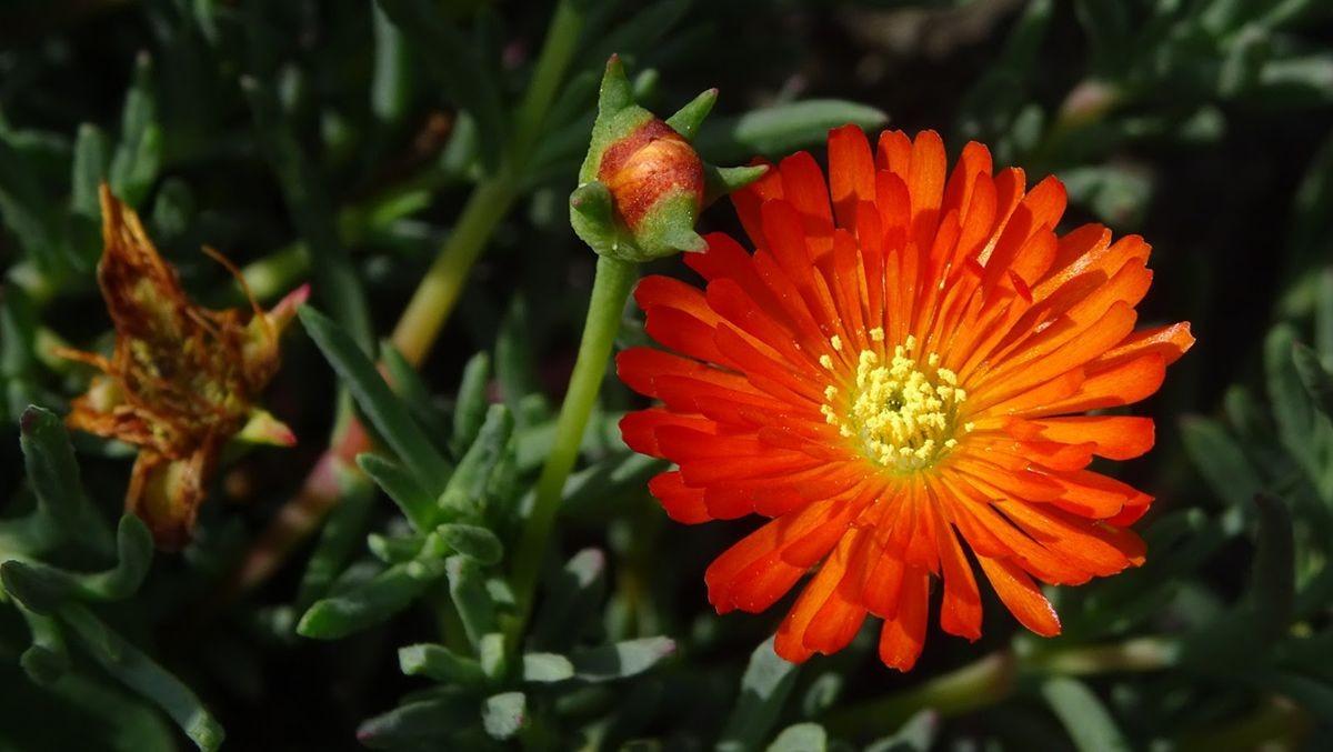花卉日记-107_图1-13