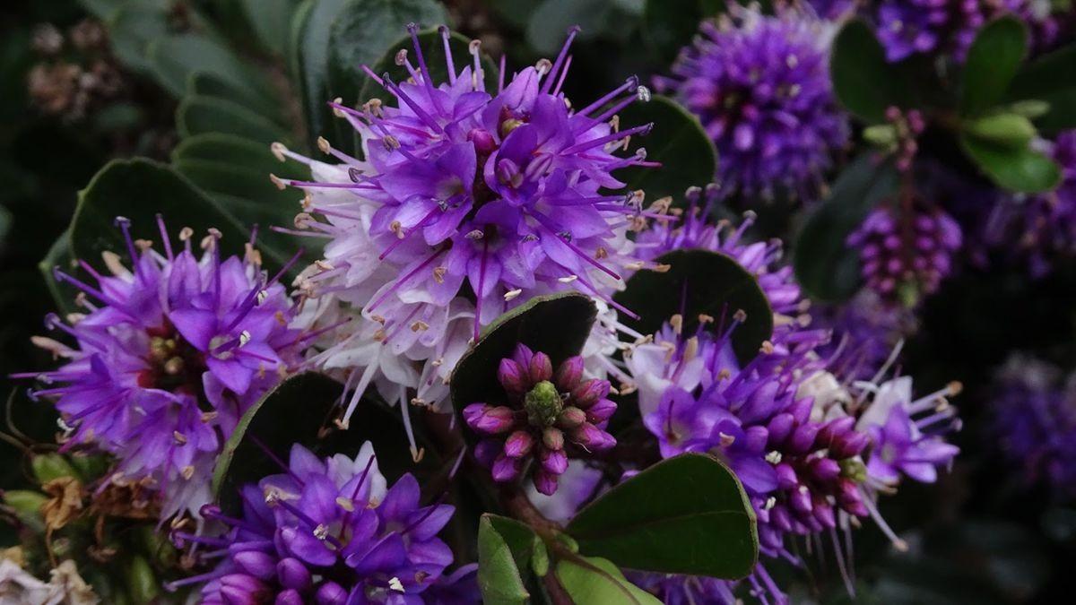 花卉日记-107_图1-16