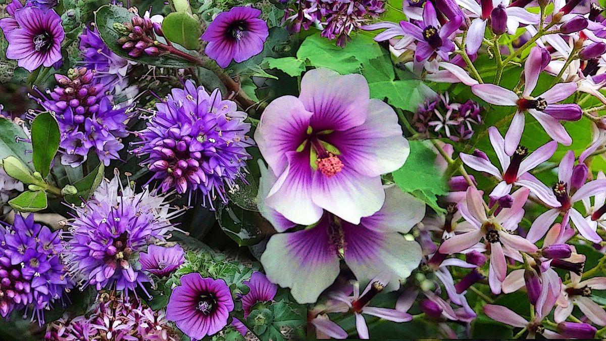 花卉日记-107_图1-17