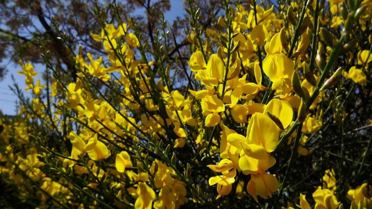 花卉日记-107_图1-19