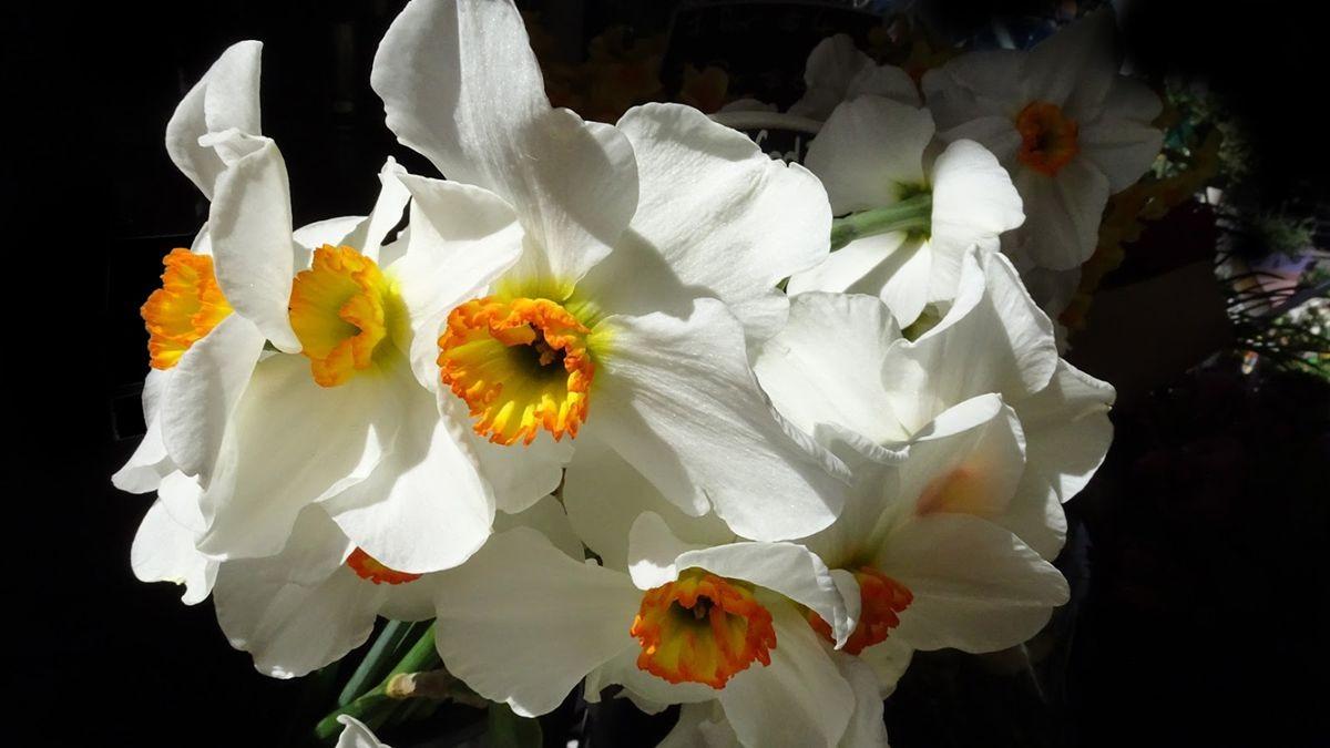 花卉日记-107_图1-21