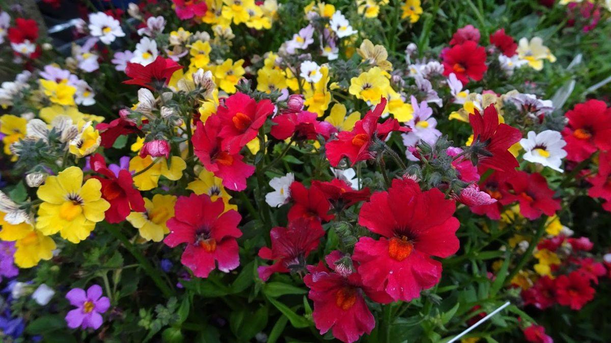 花卉日记-107_图1-24