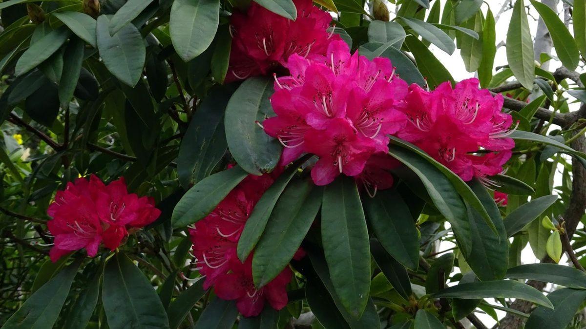 花卉日记-108_图1-2