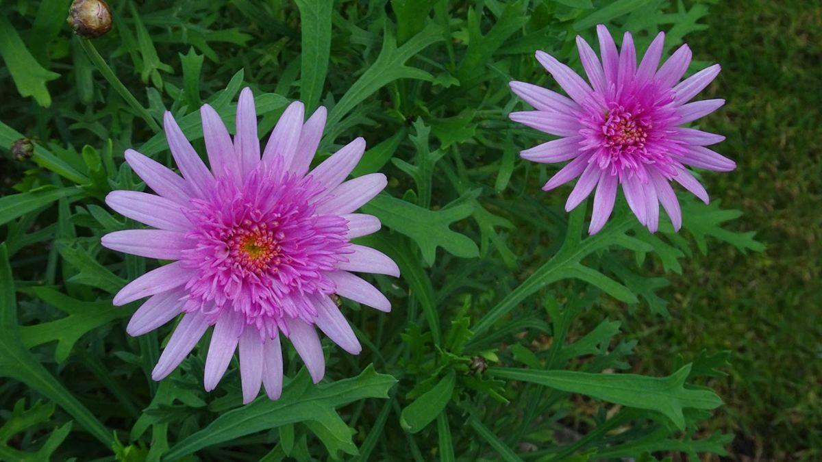 花卉日记-108_图1-7