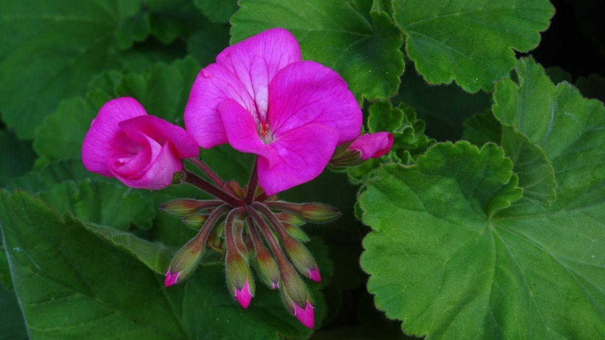 花卉日记-108_图1-8