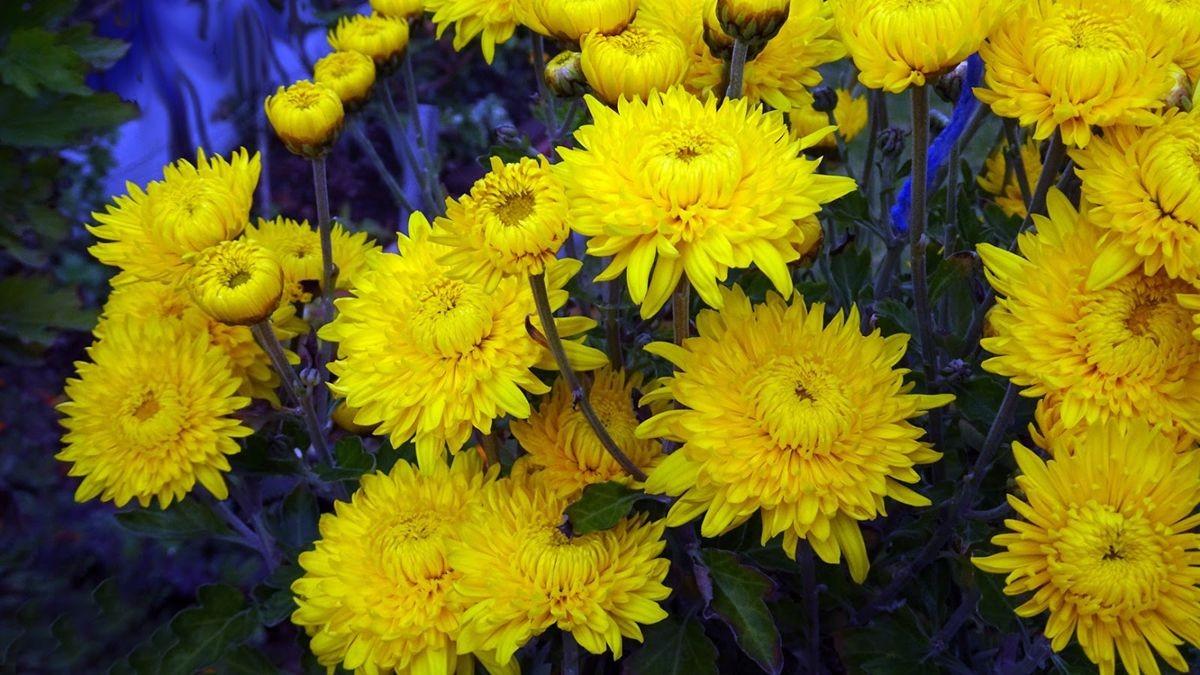花卉日记-108_图1-9