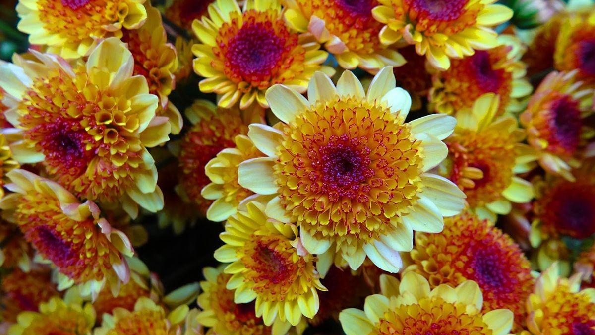 花卉日记-108_图1-11