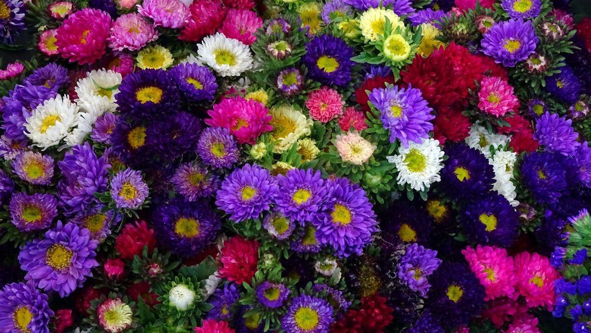 花卉日记-108_图1-12