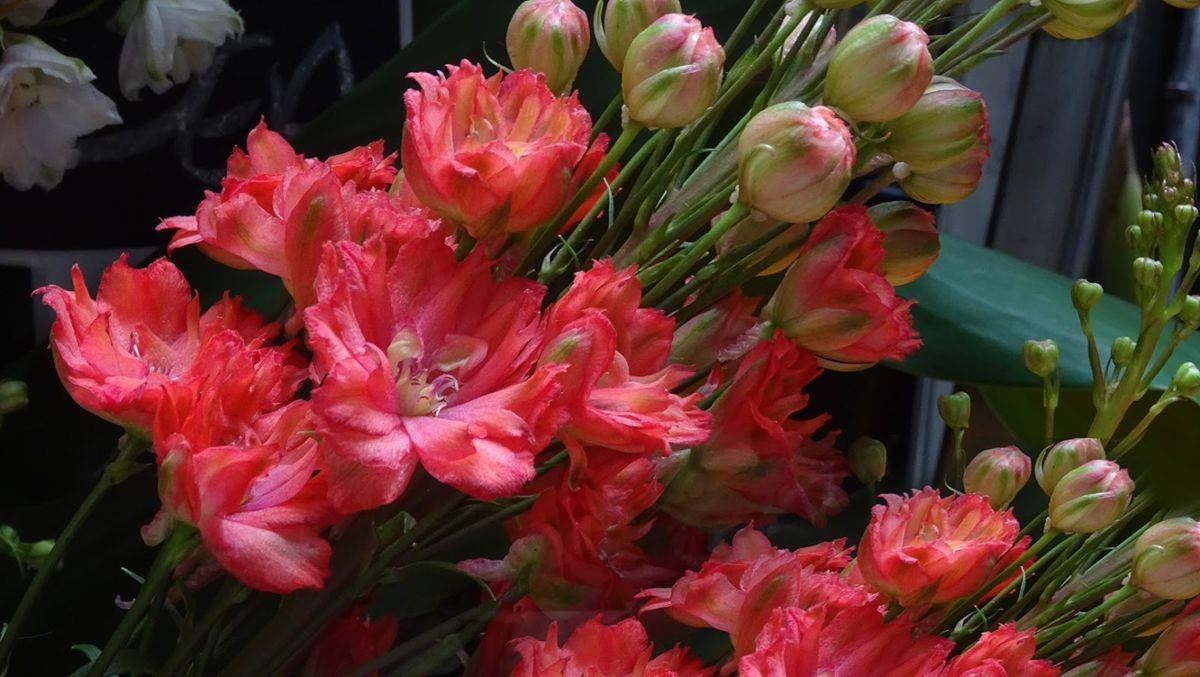花卉日记-108_图1-17