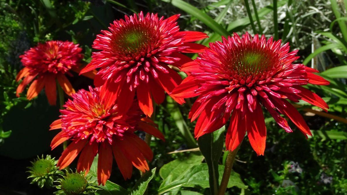 花卉日记-108_图1-19