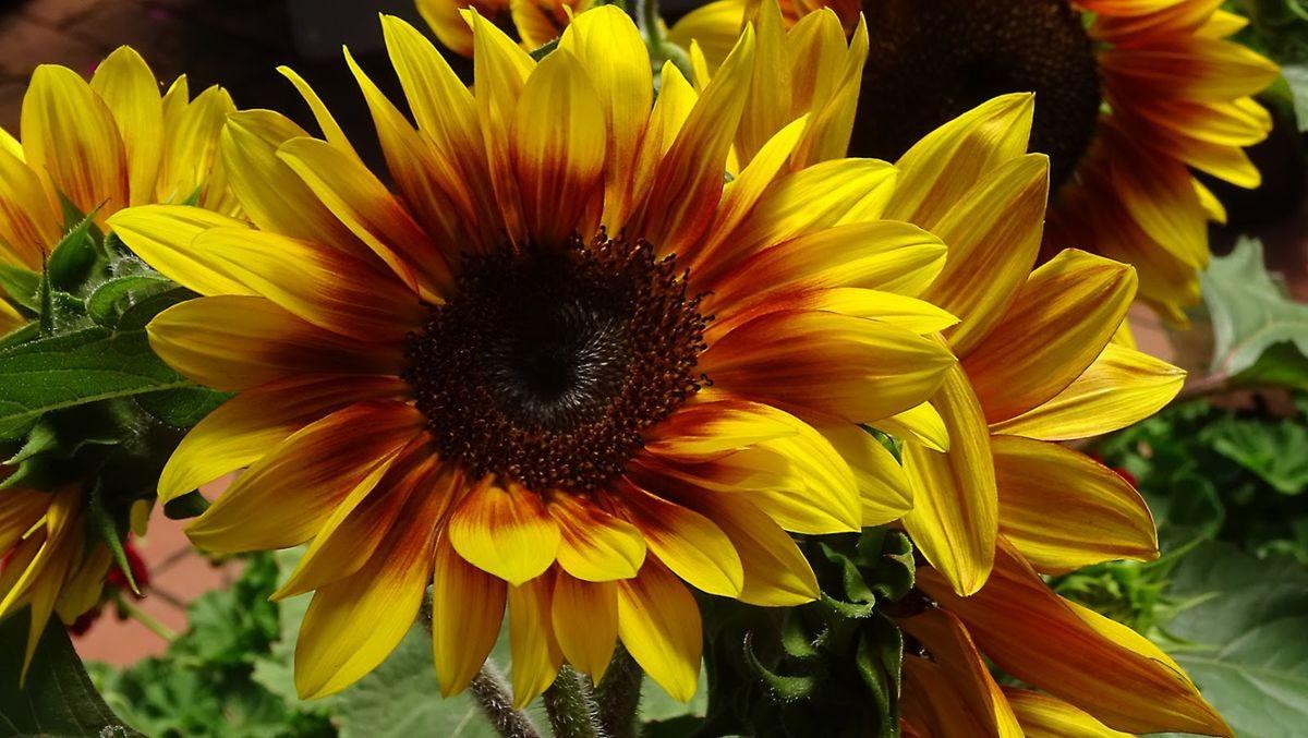 花卉日记-108_图1-20