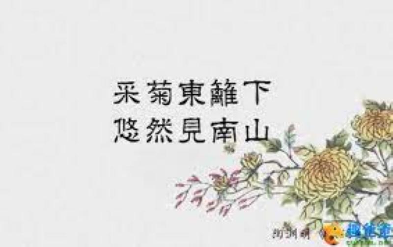 寒露秋菊情与景!(笨小孩的世界之七十八。)_图1-3