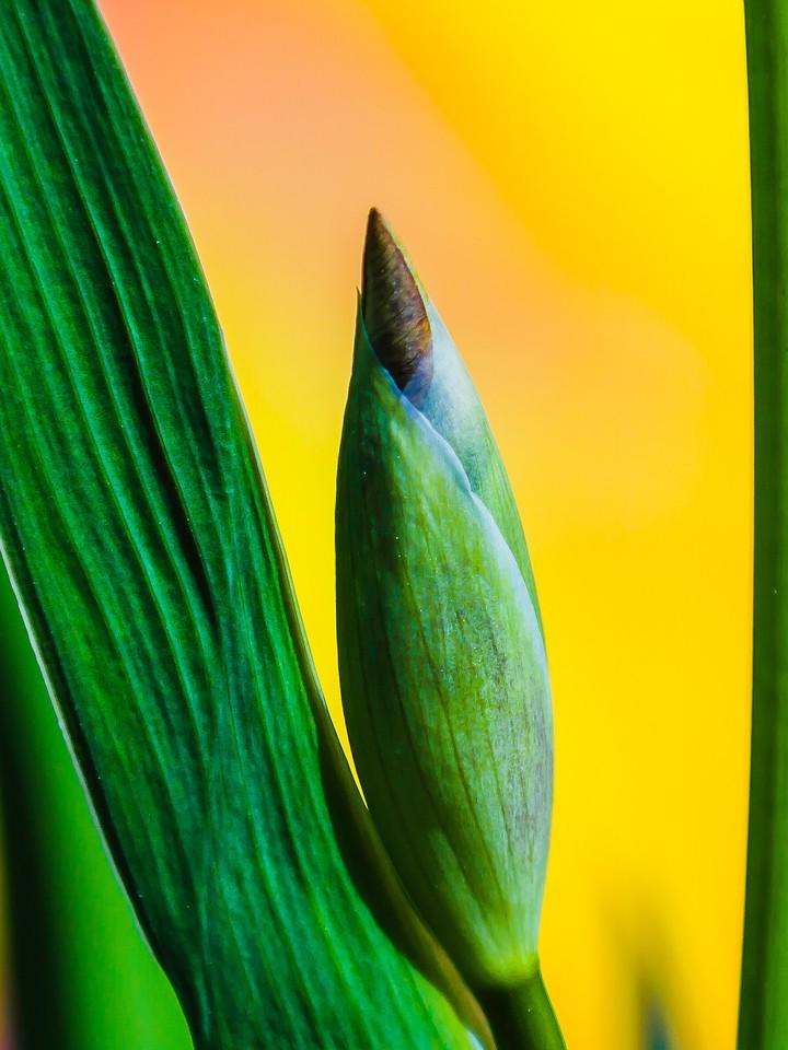 鸢尾花,空中找造型_图1-9