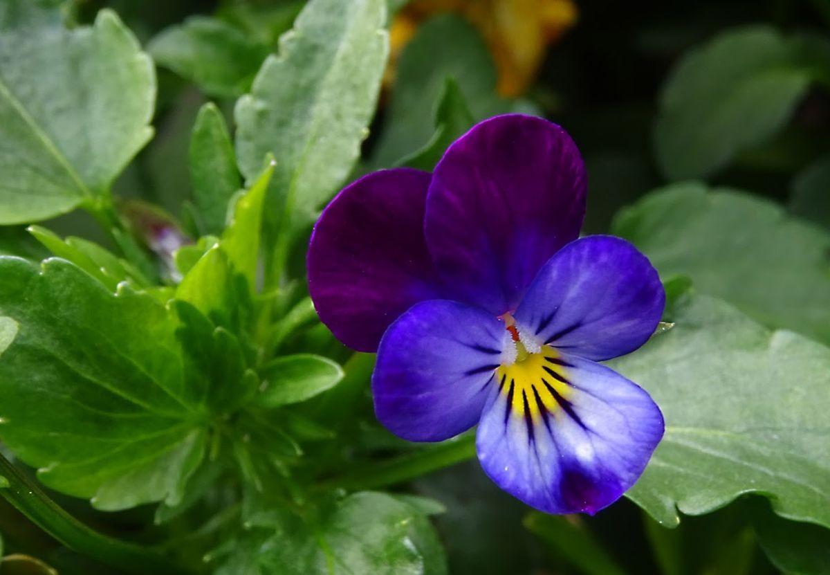 花卉日记-109_图1-7