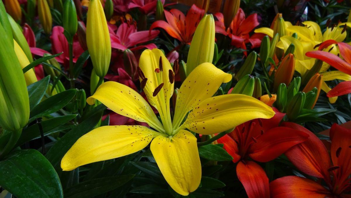花卉日记-109_图1-11