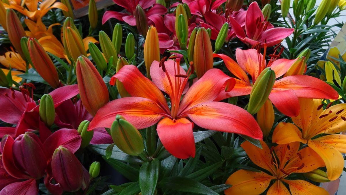 花卉日记-109_图1-14