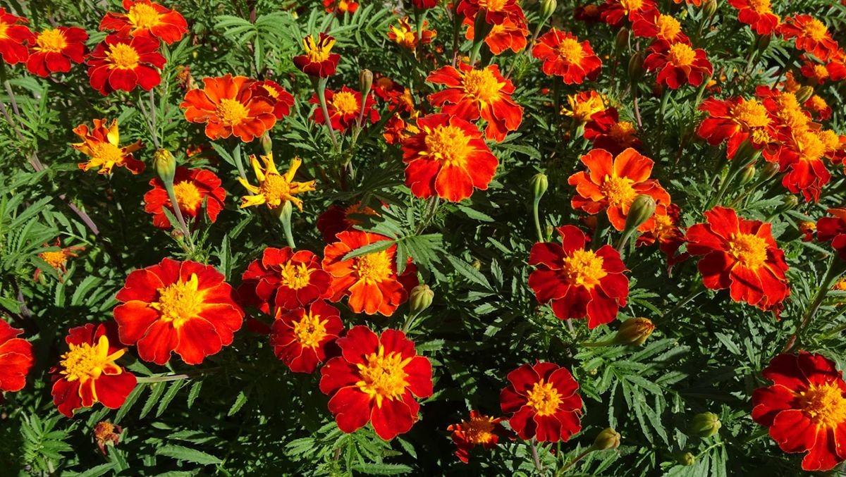 花卉日记-109_图1-15