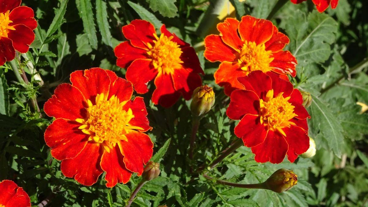 花卉日记-109_图1-16