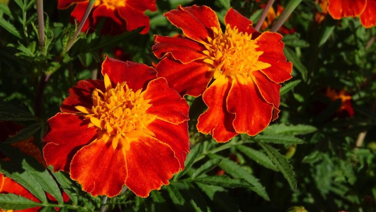 花卉日记-109_图1-17