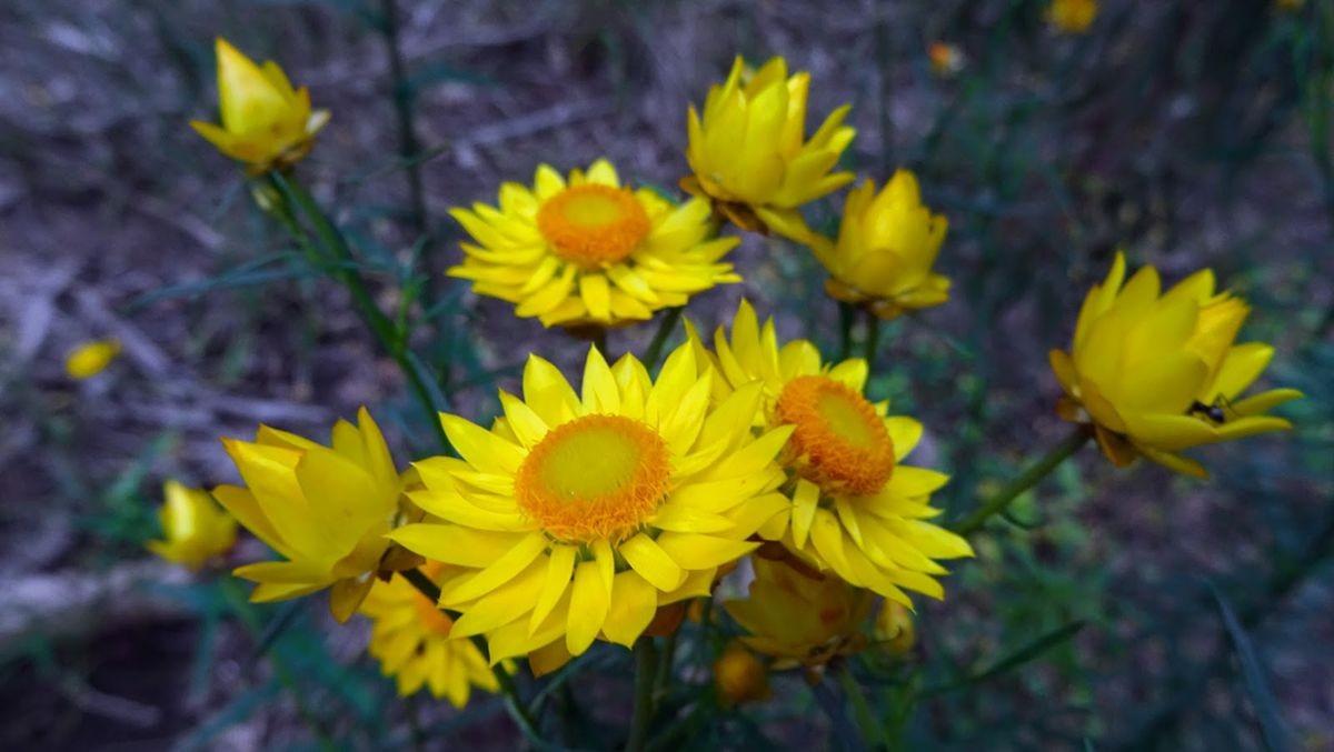 花卉日记-109_图1-23
