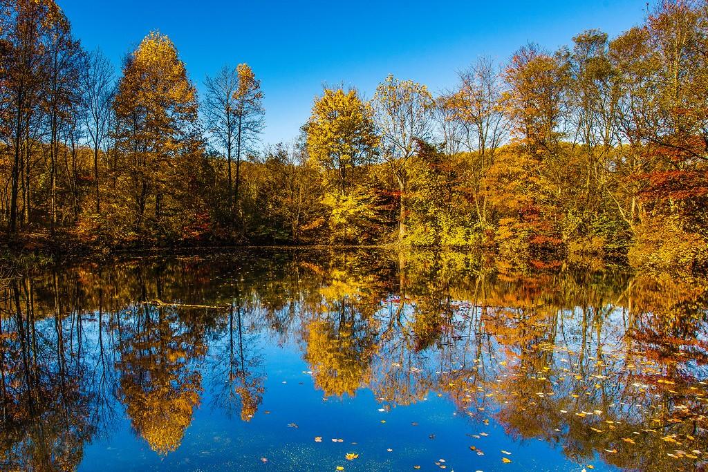 宾州长木公园,秋天印象_图1-5
