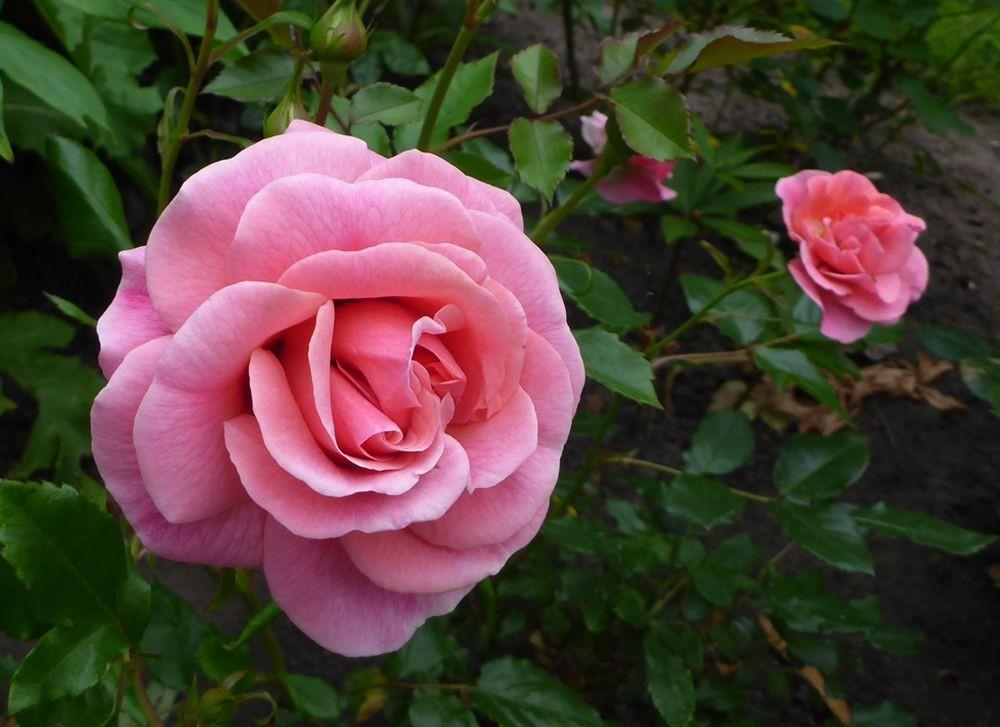 花卉日记-111_图1-3