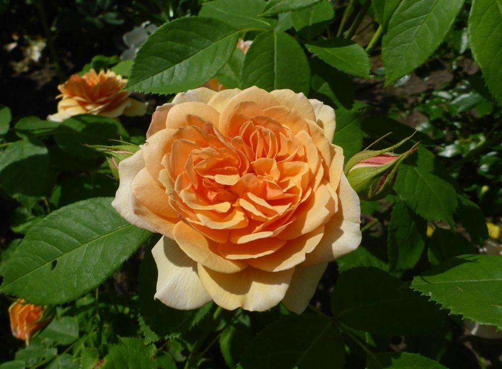 花卉日记-111_图1-4