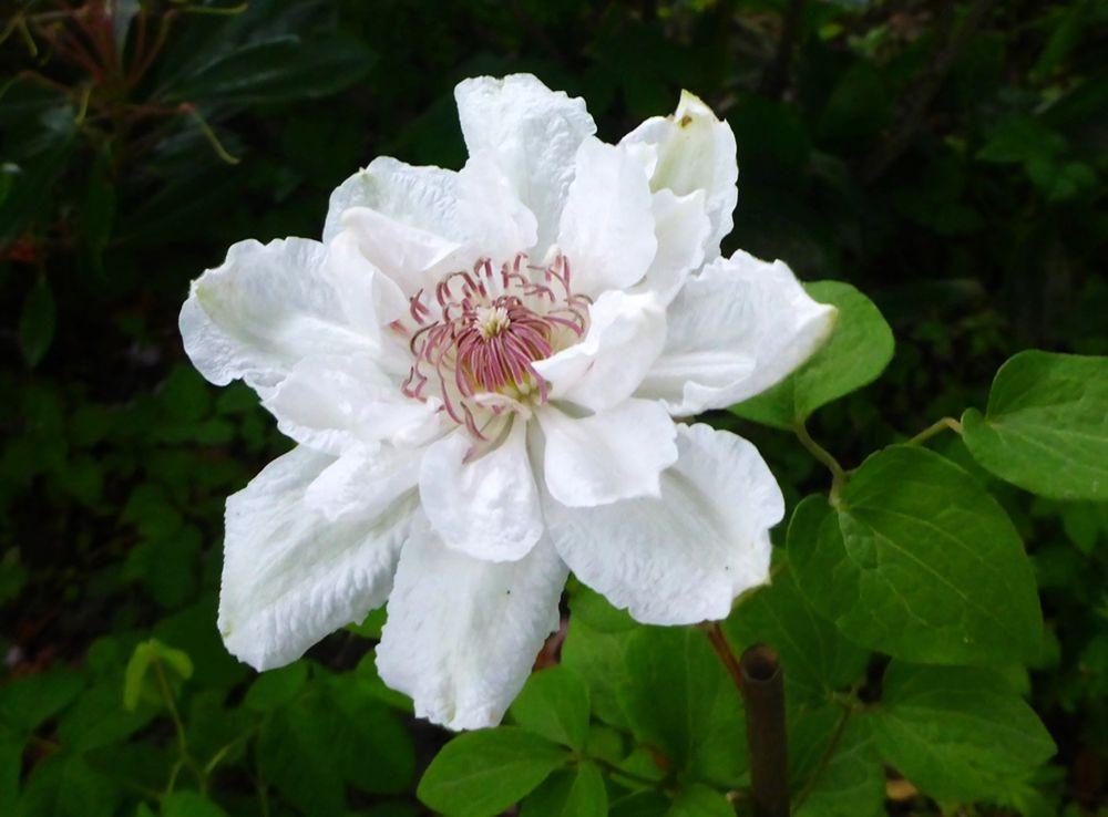 花卉日记-111_图1-8