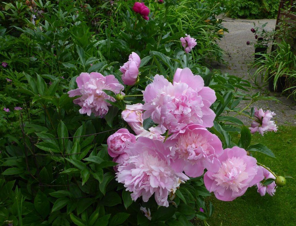 花卉日记-111_图1-9