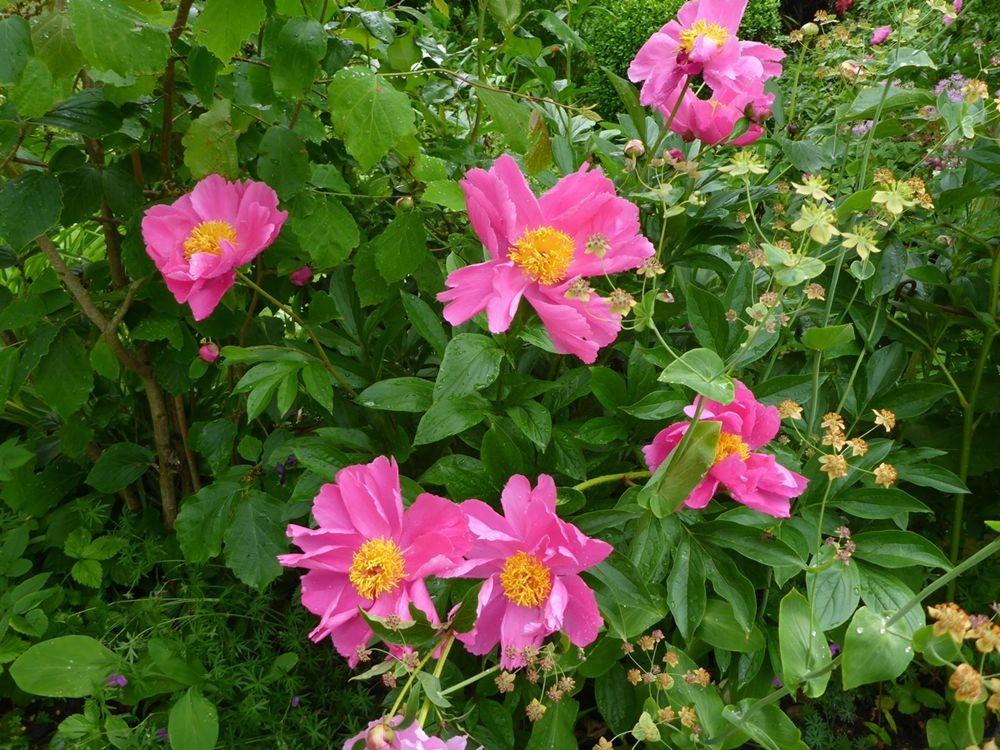 花卉日记-111_图1-10