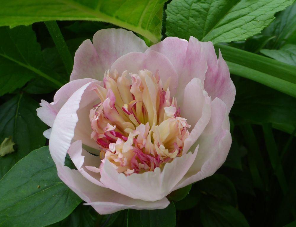 花卉日记-111_图1-12