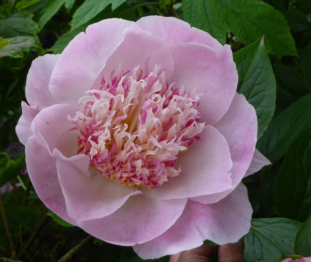 花卉日记-111_图1-13