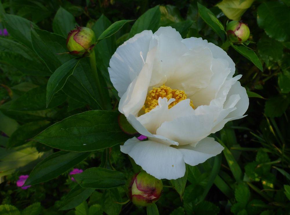 花卉日记-111_图1-14