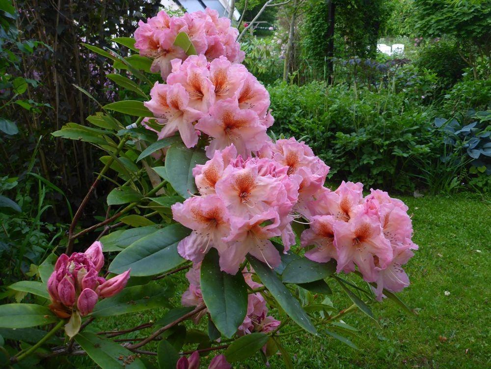 花卉日记-111_图1-16