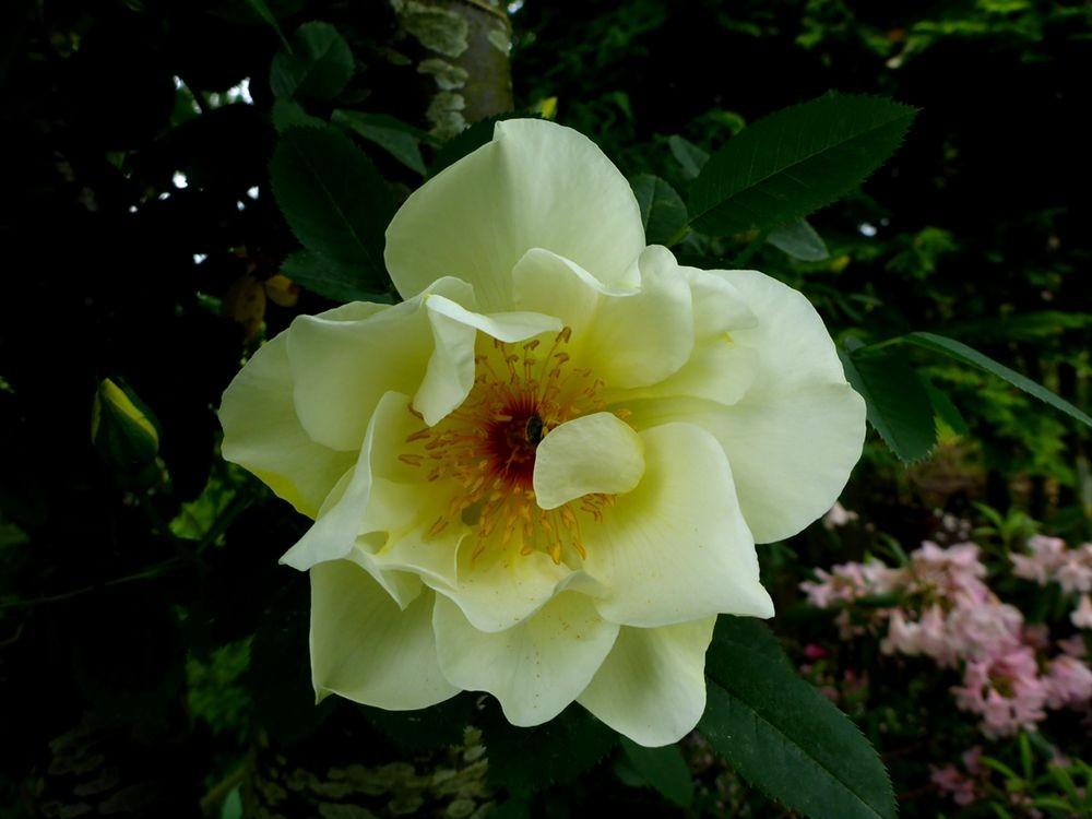 花卉日记-111_图1-23