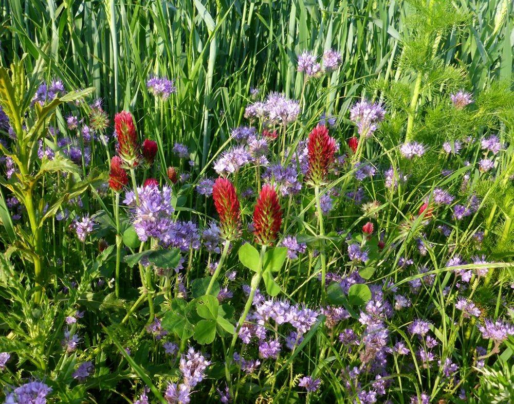 花卉日记-111_图1-24