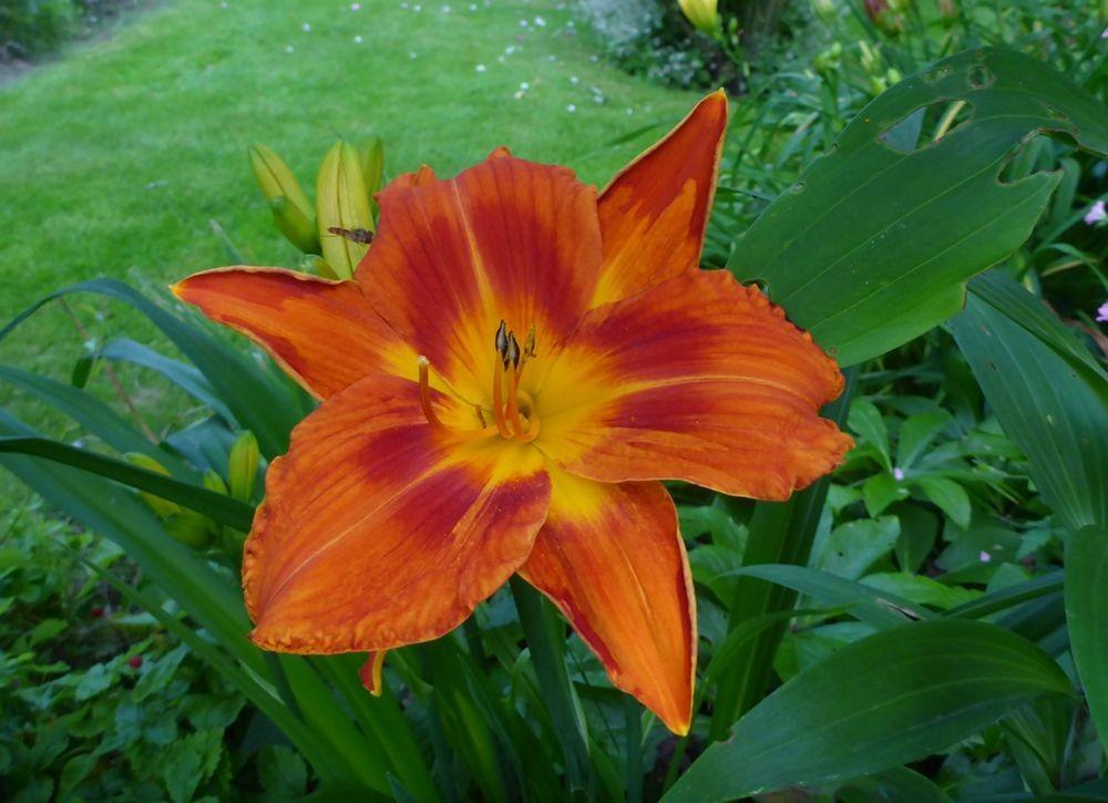 花卉日记-112_图1-6