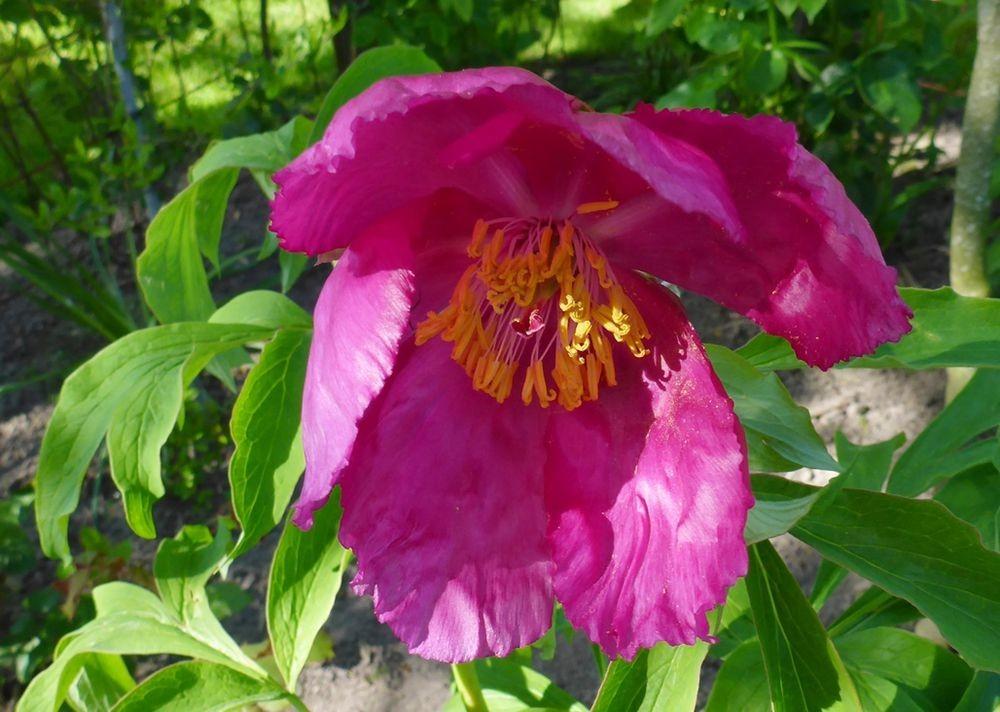 花卉日记-112_图1-1