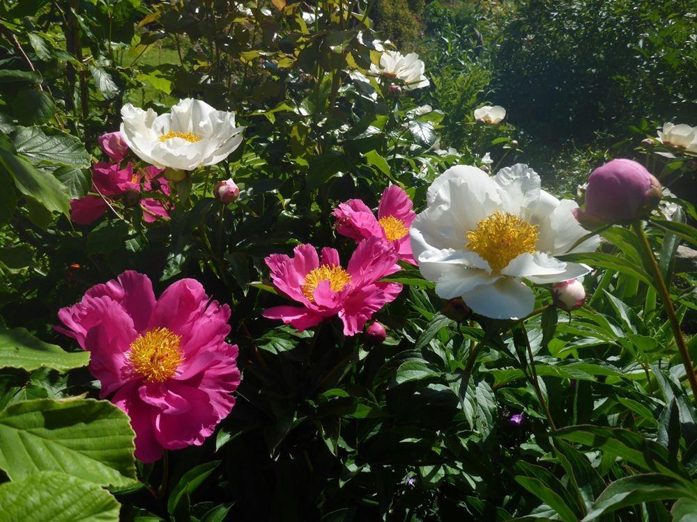 花卉日记-112_图1-2