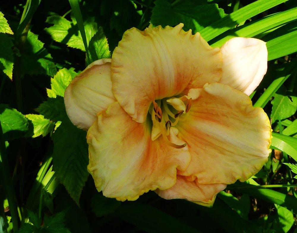 花卉日记-112_图1-8