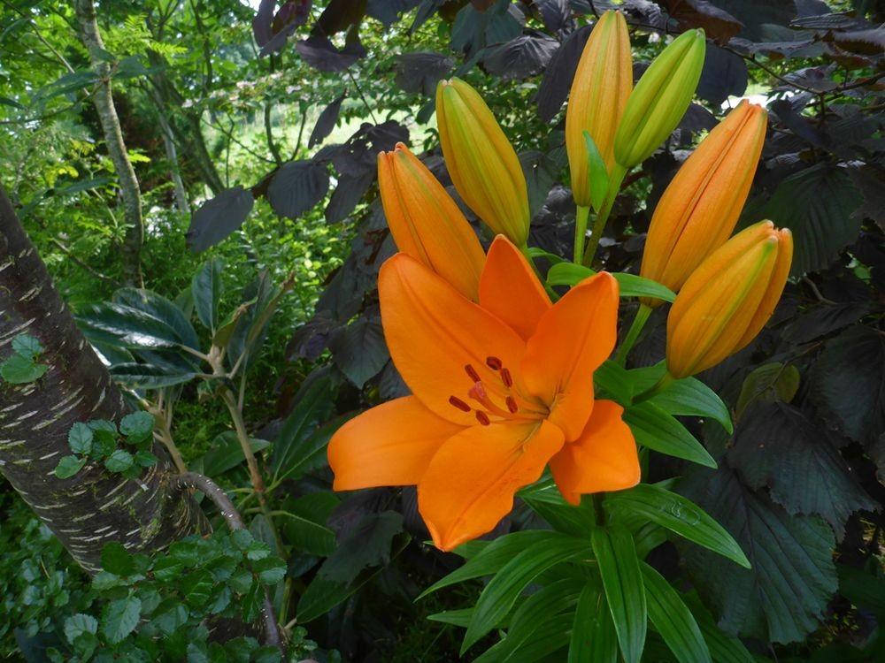 花卉日记-112_图1-10