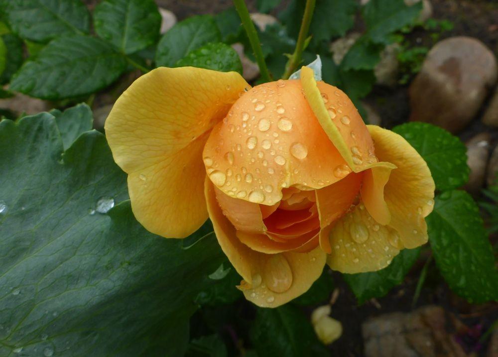 花卉日记-112_图1-14