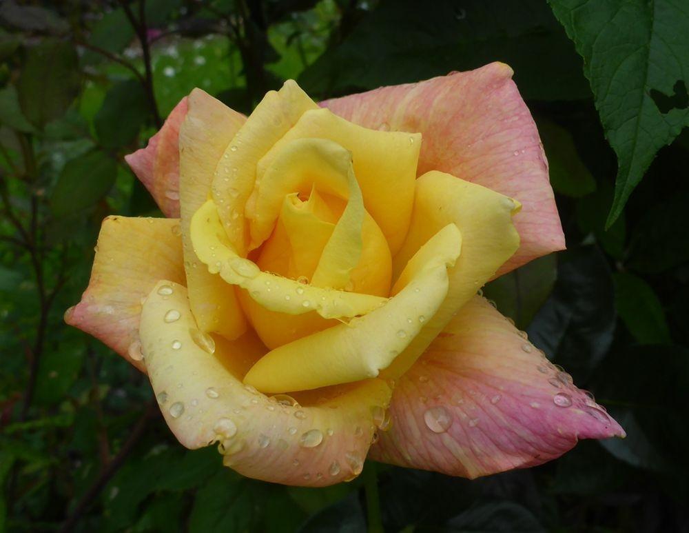 花卉日记-112_图1-15