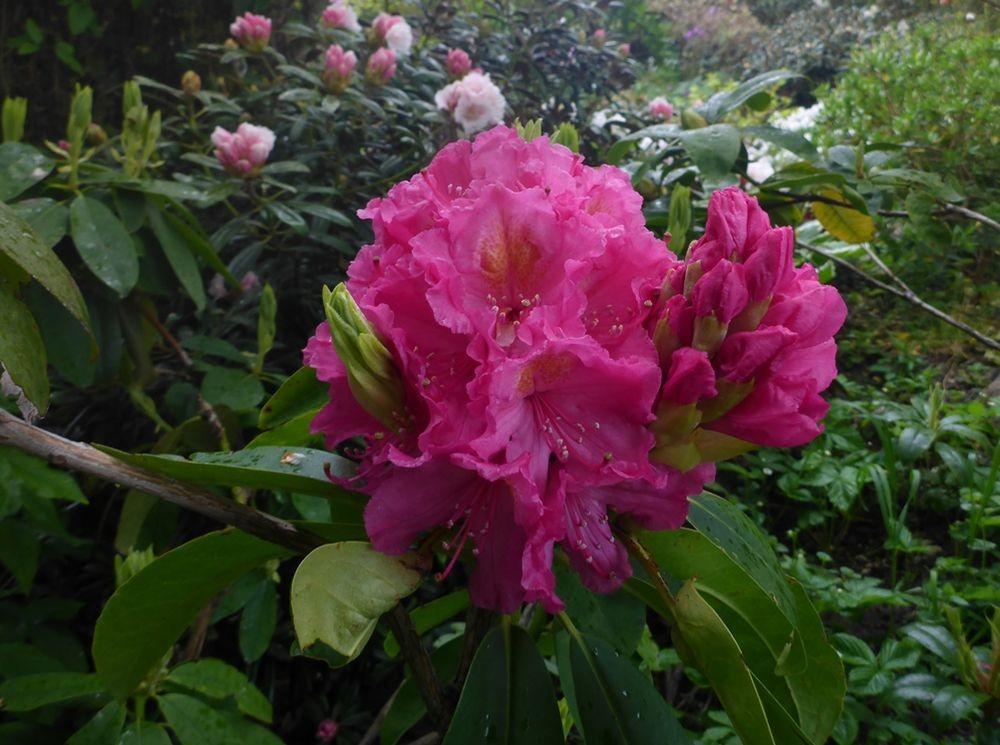 花卉日记-112_图1-18