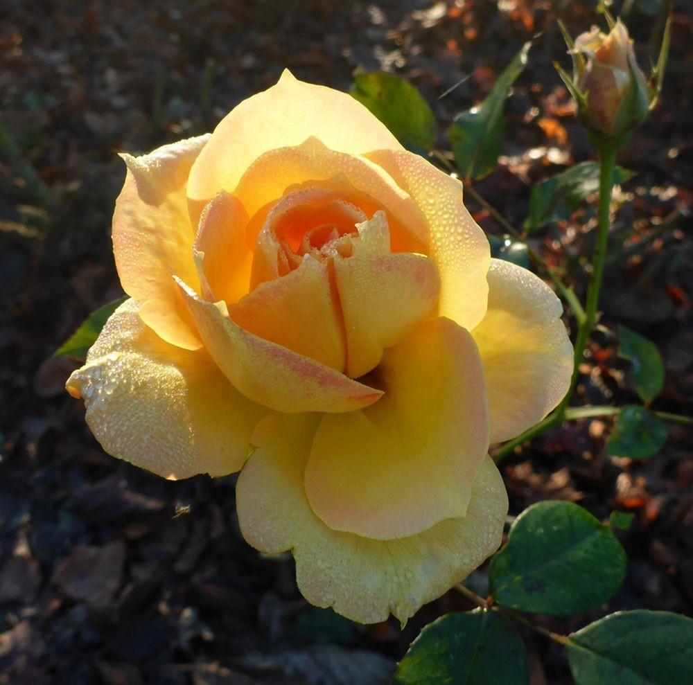 花卉日记-112_图1-20