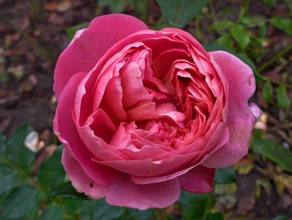 花卉日记-112_图1-23
