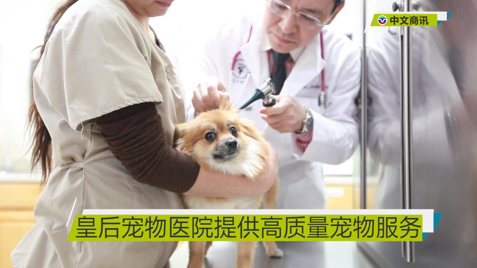 【视频】皇后宠物医院提供高质量宠物服务