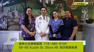 【视频】森林小丘宠物医院全方位宠物医疗
